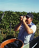 Measuring must weight with refractometer, Kaiserstuhl, Baden
