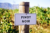 Pinot noir vineyard of Bon Courage Winery, Robertson, S. Africa