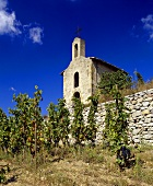 Syrah vineyard with Chapoutier chapel, Hermitage, Rhone