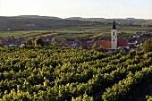 Vineyards near Langenlois in Kamptal Valley, Lower Austria