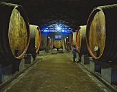 Viña Valdevieso, one of the oldest wine estates in Chile