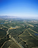 Carneros wine-producing area from the air, California, USA