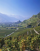View over vineyards on Saillon in Canton Valais, Switzerland