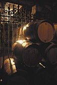 Barrique barrels in a cellar