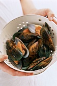 Green-lipped mussels (New Zealand, Australia)