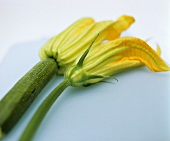 Courgette flowers: female with fruit and male with stalk