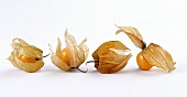 Four cape gooseberries (physalis) with opened cases