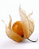Cape gooseberry with opened case