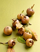 Medlars with leaves on green background