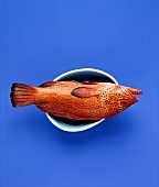 Brown grouper (Coral grouper) in a blue bowl