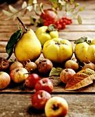 Herbstfrüchte: Quitten; Mispeln; Eberesche; Äpfel und Birnen