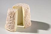 Chabichou du Poitou (French goat's cheese)
