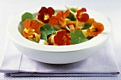 Cheese salad with nasturtium and nasturtium flowers