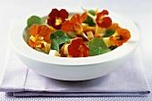 Cheese salad with nasturtium and nasturtium flowers