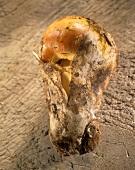 Caesar's mushroom (Amanita caesarea)