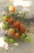 Cherry tomatoes, variety Pink Cherry Tomato (or Cerise Pink)