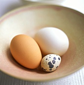 Quail's egg with brown and white hen's egg in a dish