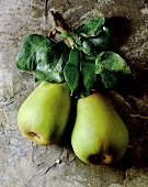 Two pears with twigs and leaves (Alexander Lucas variety)