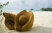 Coconut in its shell, lying in the sand