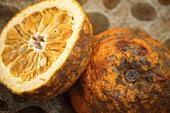 Rotten bitter oranges (Citrus aurantium L.)