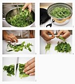 Preparing rocket: washing, sorting, removing stalks & chopping