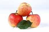 Drei Äpfel und Blatt der Sorte Ambassy