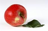 Apfel der Sorte Ambassy und ein Apfelblatt