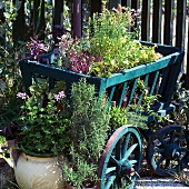 Fresh herb pots decoratively arranged in a wooden wheelbarrow