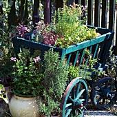 Frische Kräutertöpfe, dekorativ auf einer Holzschubkarre