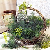 Dill in a basket