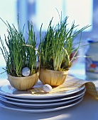 Chives in flowerpots surrounded by eggs