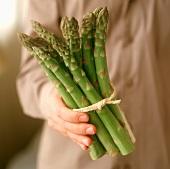 Hand hold green asparagus spears