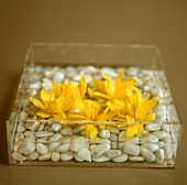 Yellow flowers with stones in glass container