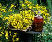 Home-made St. John's wort oil and flowering St. John's wort
