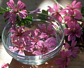 Home-made mallow flower tincture (for indigestion)