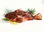 Scorpion fish, herbs and slices of lemon