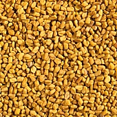 Fenugreek, filling the picture
