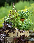 Pots of herbs in a chip basket