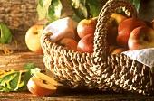 Basket of organic apples (Fuji and Elstar)