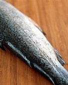 Tail of a trout