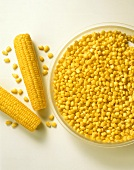 Two corncobs beside grains of corn on glass plate