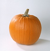 Jack O' Lantern (pumpkin)