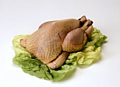 Whole fresh chicken on lettuce leaves