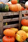 Still life with several types of pumpkin
