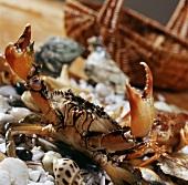 Live crab (China)