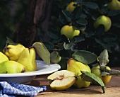 Quinces in a bowl and on the tree
