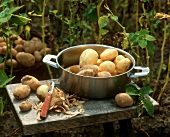 Peeled and unpeeled potatoes in a pan in garden