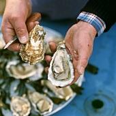 Freshly opened oyster
