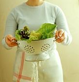 Salatblätter in Fussseiher waschen