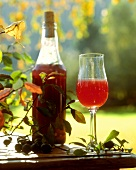 Sloe liqueur in glass and bottle on a garden table